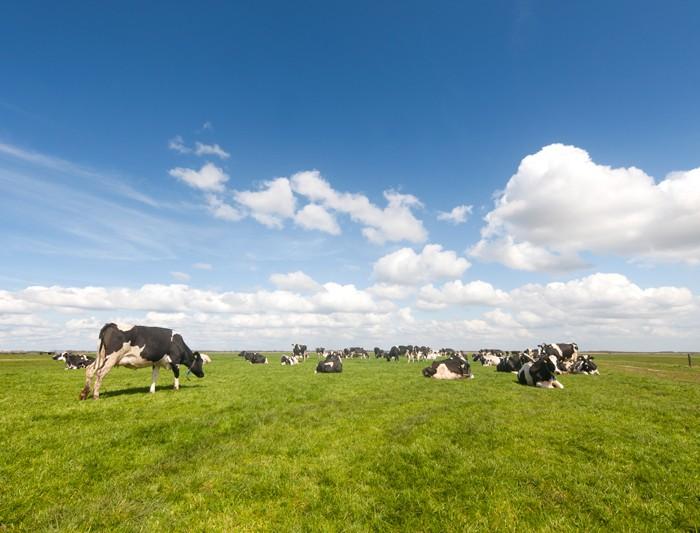Nieuw fonds voor agrarische bedrijfsopvolging