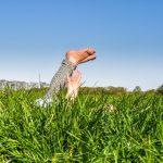 Wijzigingen NSW landgoederen in 2021
